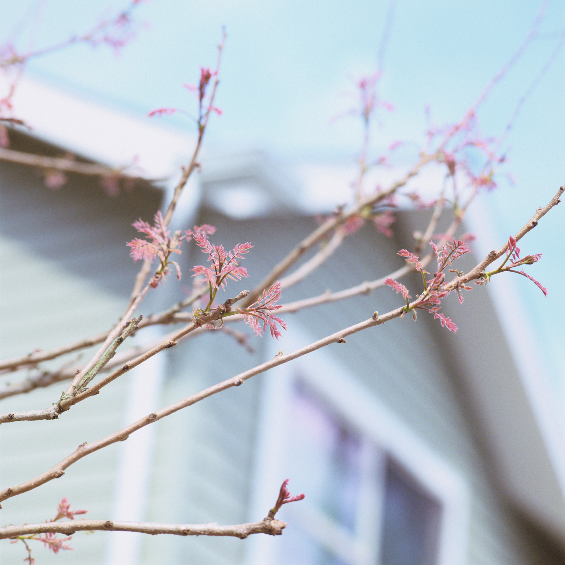 Spring #8