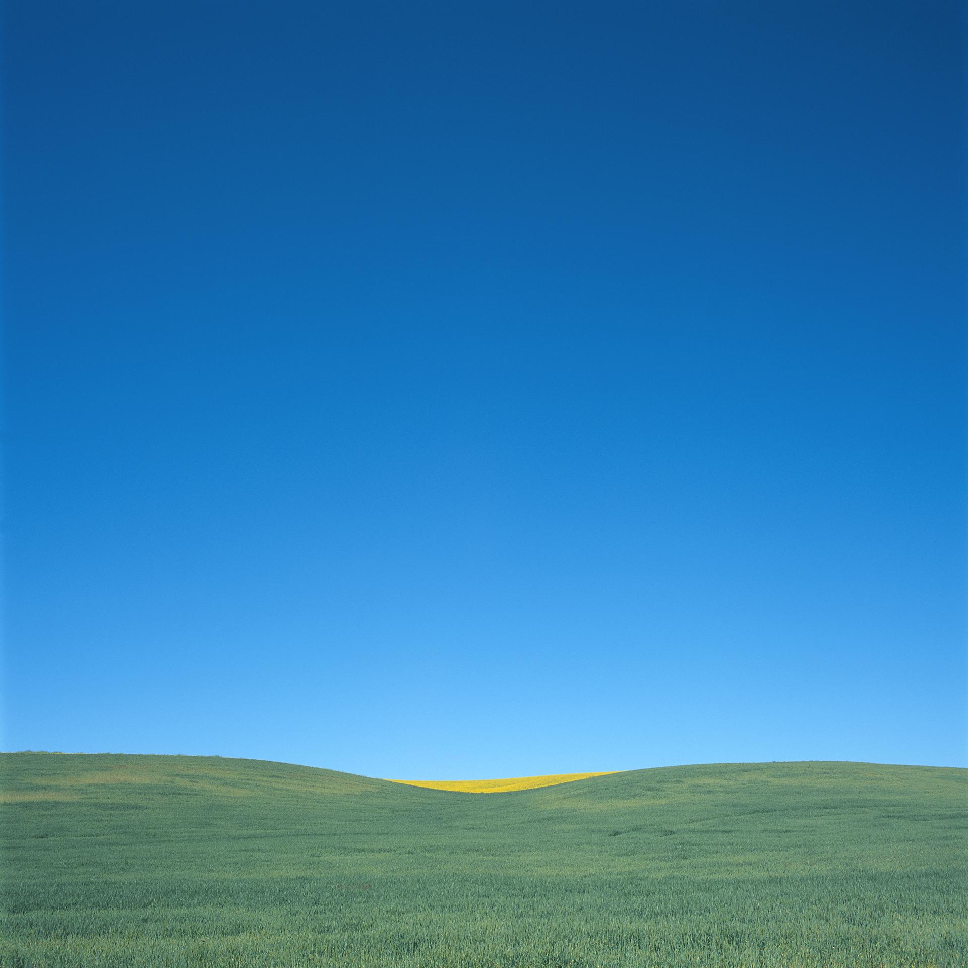 Yellow Swell.jpg