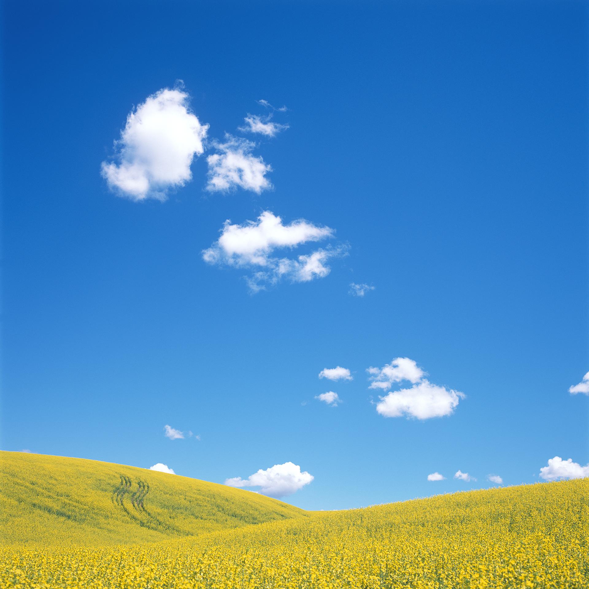 Yellow Field.jpg