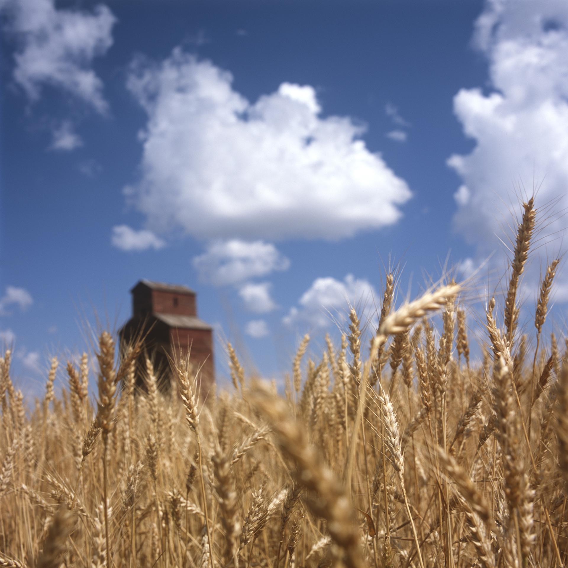 Montana Grain Elevator, 2009