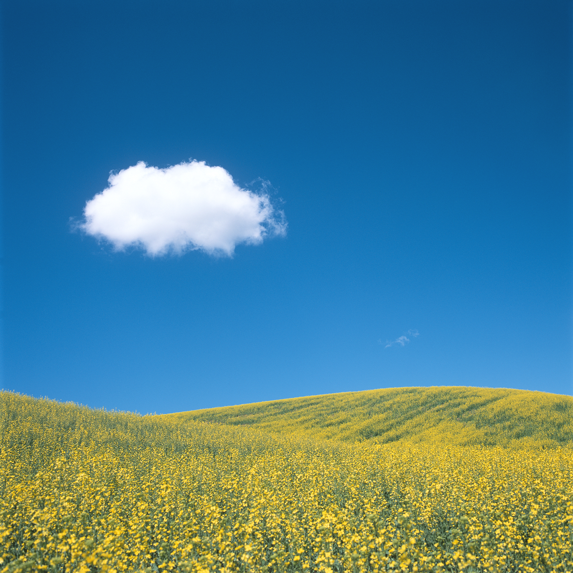 Cloud Over Yellow Hills, 2018