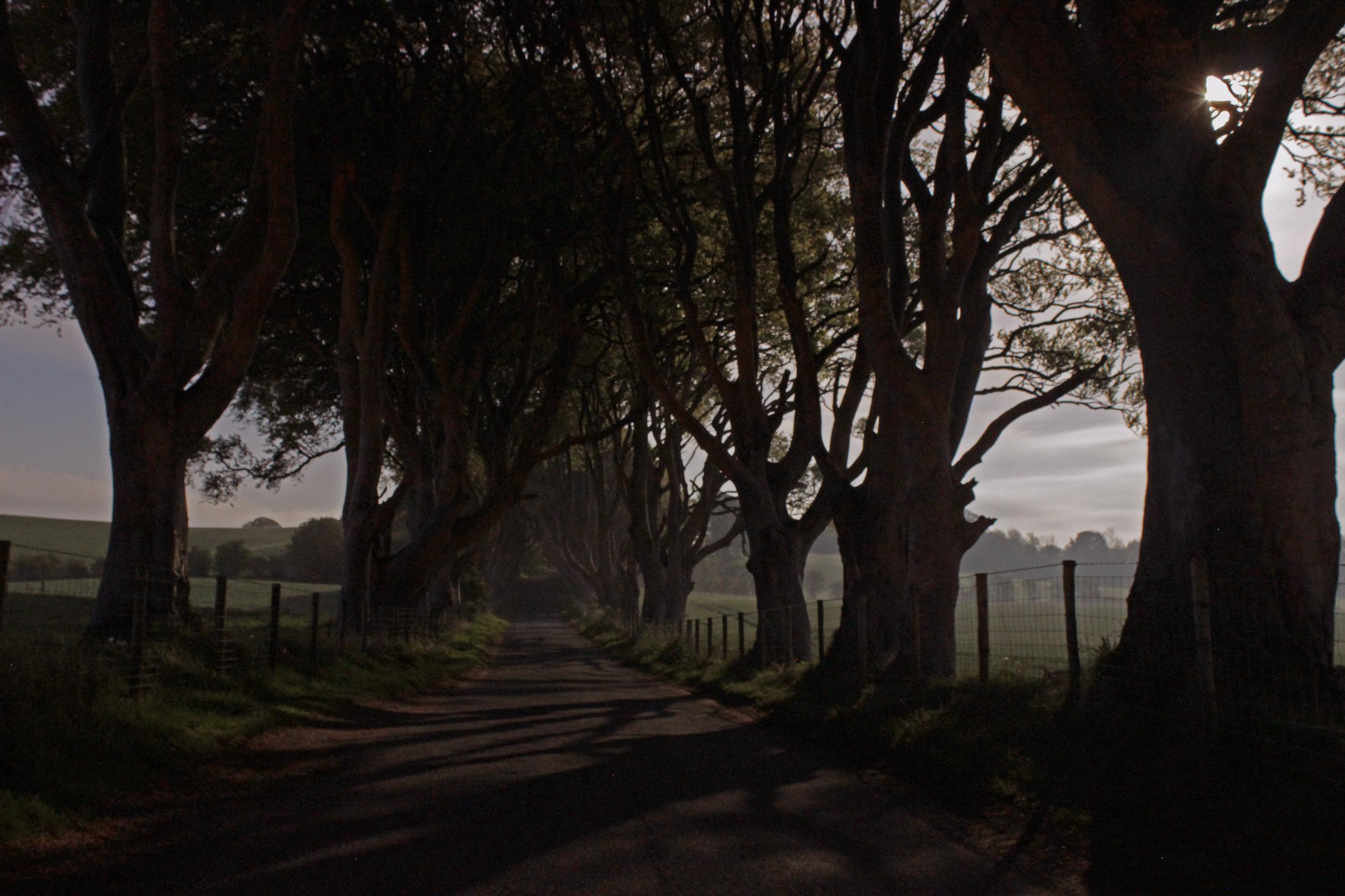The Dark Hedges, Co. Antrim