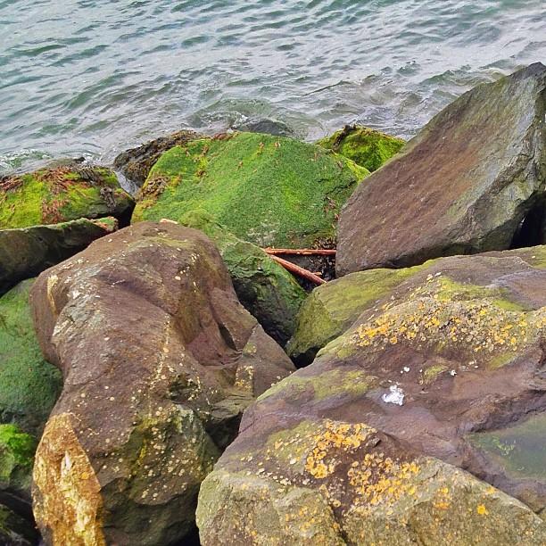 rocks-sea-driftwood-lichin