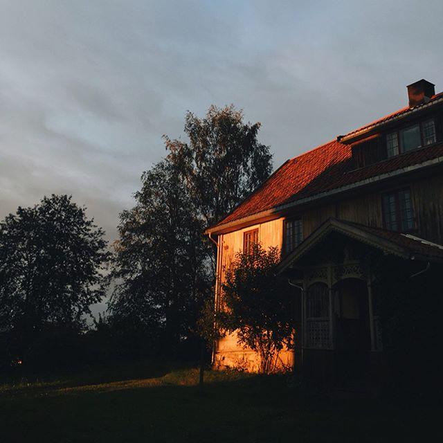 Słońce zachodzi już prawie trzy godziny wcześniej niż kiedy po raz pierwszy postawiliśmy w Norwegii stopy (i łapy). Maliny moroszki doścignęły je właśnie kolorem 🧡 #mølte #złotagodzina #moroszka #ciepło #domek #chybaidziejesień