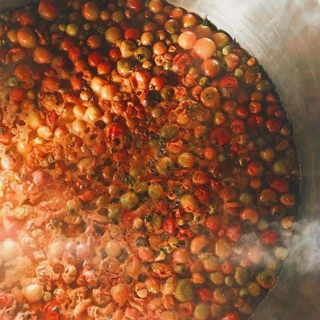 Którejś nocy nadeszła zima, a z nią nagły koniec pomidorów, które dzielnie trzymały się jeszcze na krzakach w szklarni. Wszystkie zerwane, jeszcze zamarznięte trafiły do największego garnka na świecie i kapią się nad żywym ogniem zamieniając w doskonały sos ☀️ #addiopomidory #dużodoprzetarcia