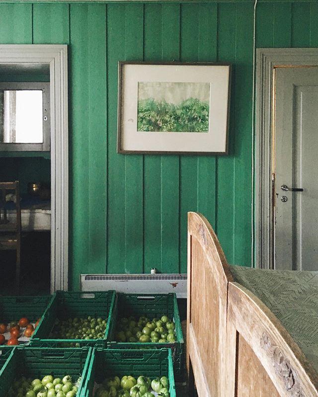 A w zielonym pokoju 🦚 #ostatki #szczescie #addiopomidory #dojrzewajcie