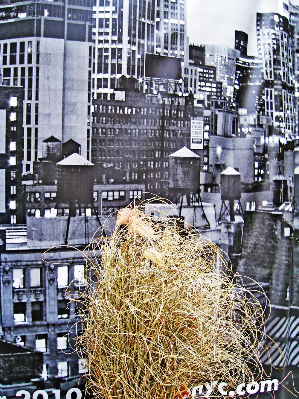 """Untitled"" by Ira Joel Haber"