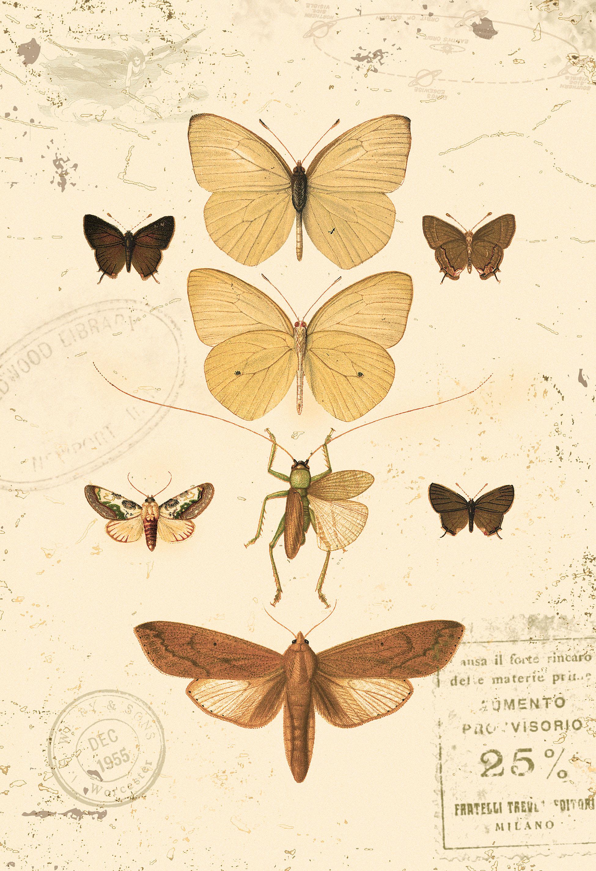 moths_5_lo_res.jpg