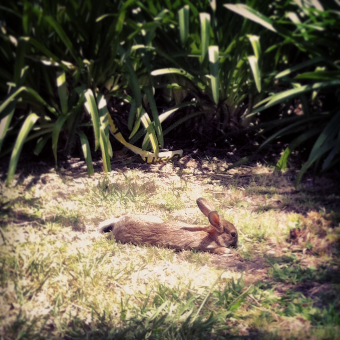 We caught this little cutie sun bathing in the vineyard. What a life!