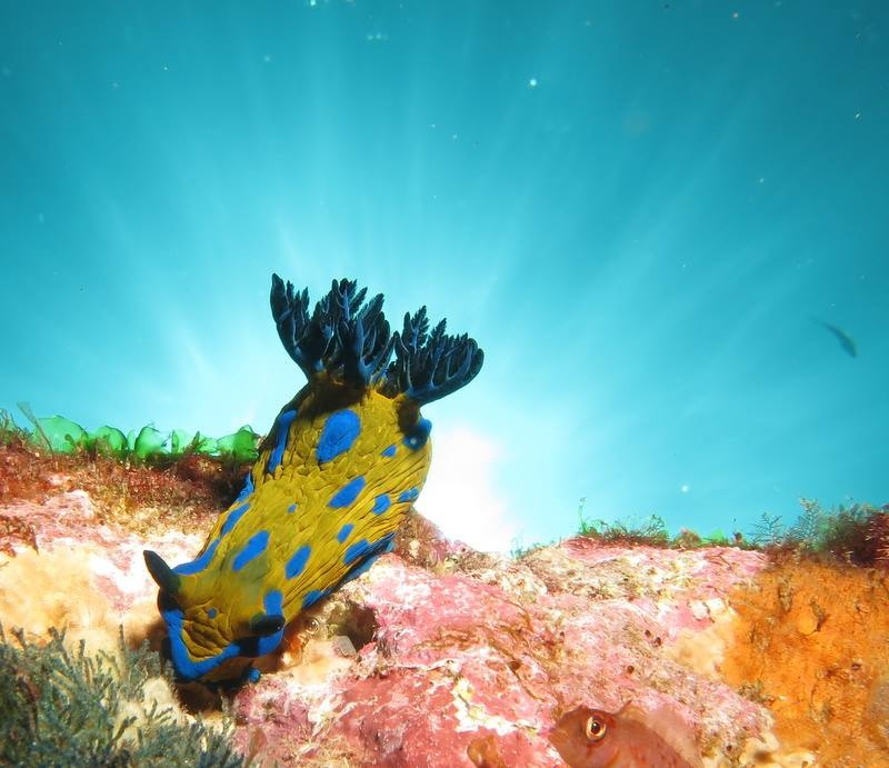 Fantastic photo of a nudi branch courtesy of Dive!Tutukaka. It might be time for me to invest in an underwater camera.