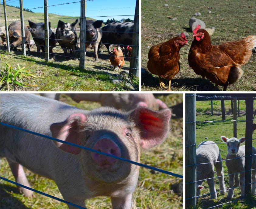 farmyard.jpg