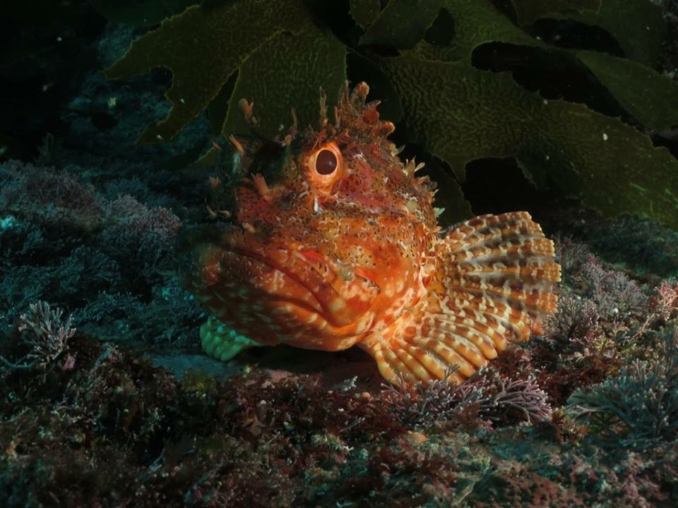 We spotted quite a few scorpion fish blending in with the coral.