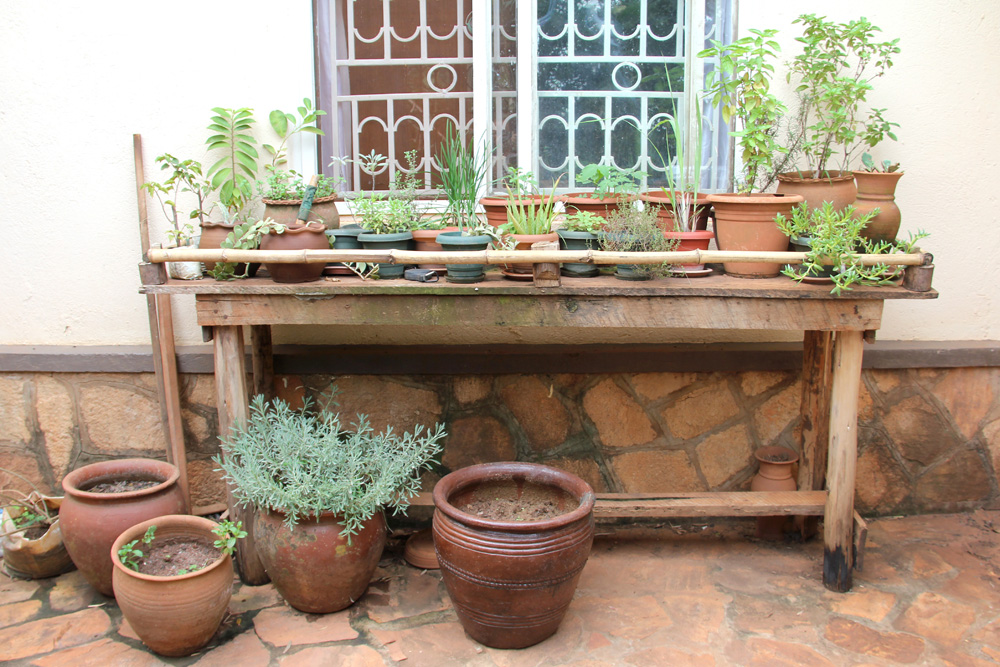 My herb garden, on our patio