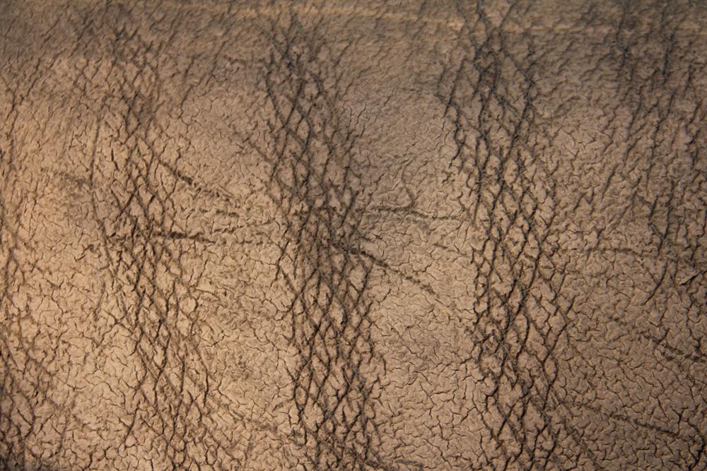 Rhinoceros skin