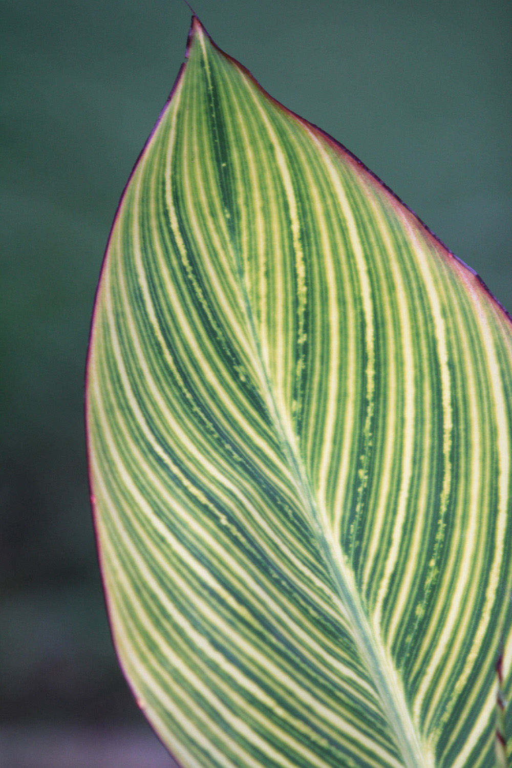 Lines and symmetry of a leaf