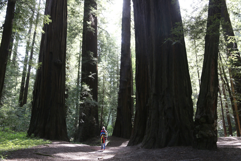 Eric, dwarfed by the redwoods