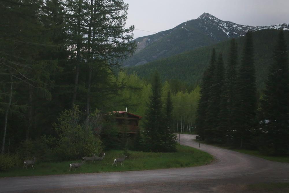 Deer walk in front of a cabin in Glacier National Park