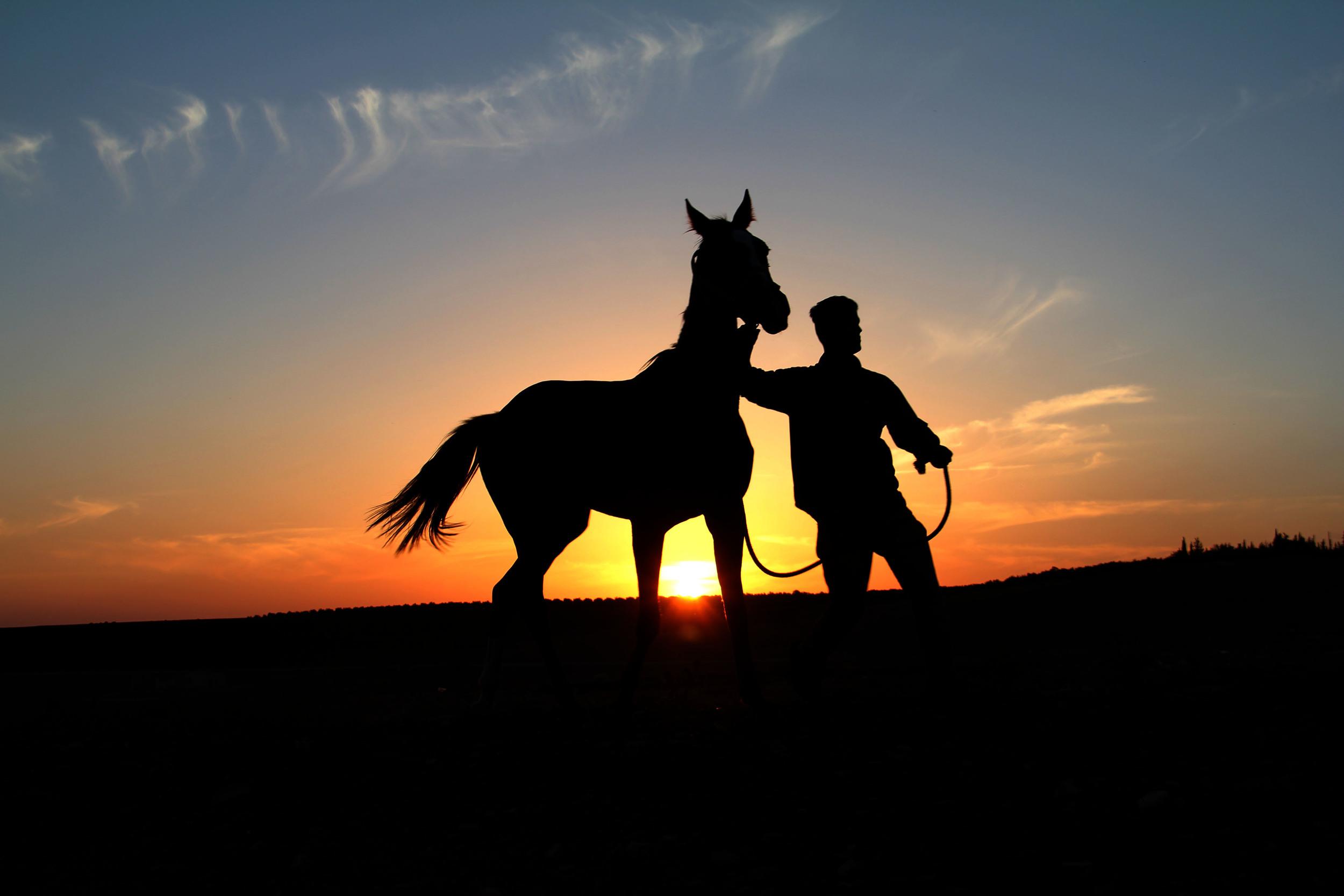 3.11.13 A boy and a horse.JPG