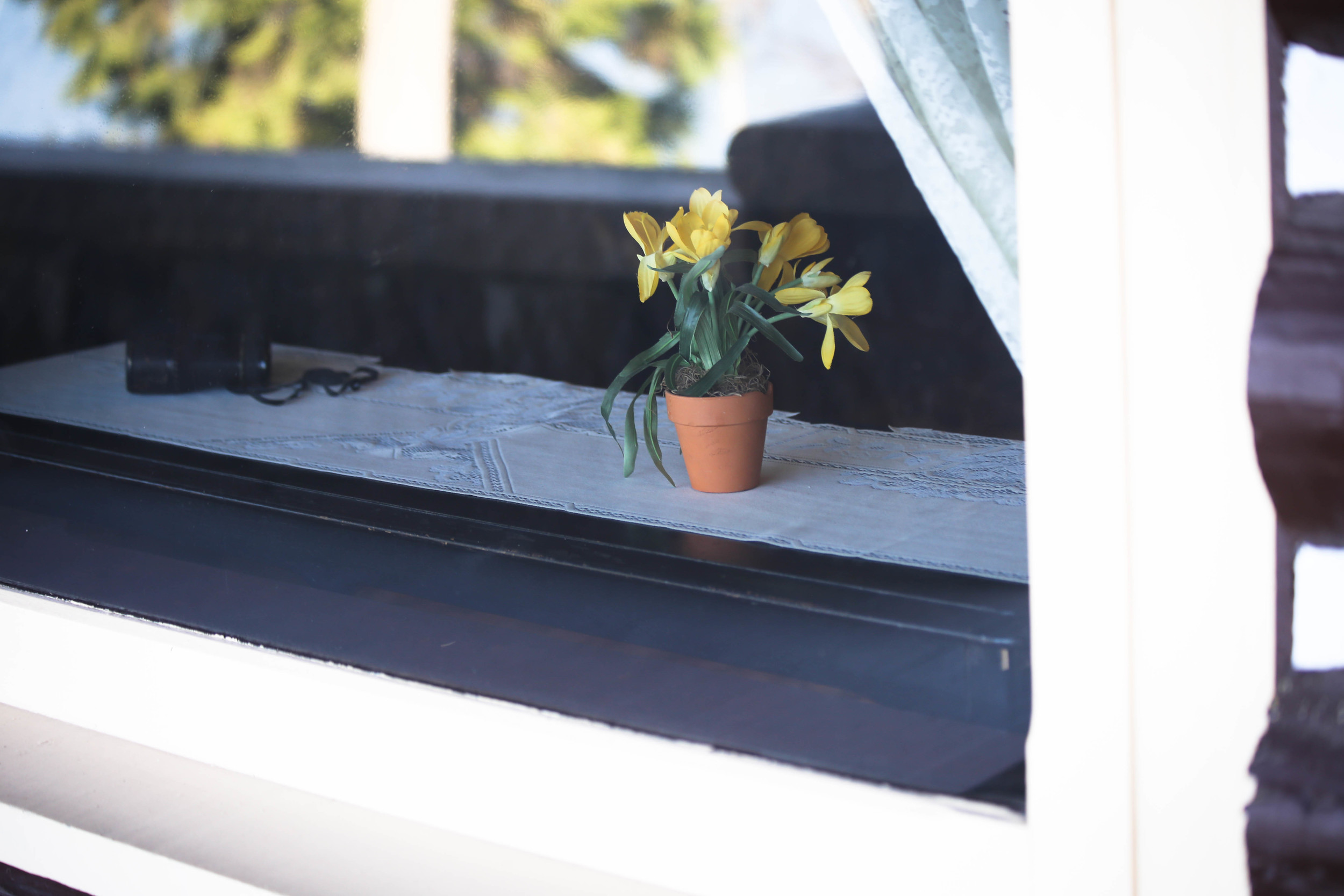 flowers in the window