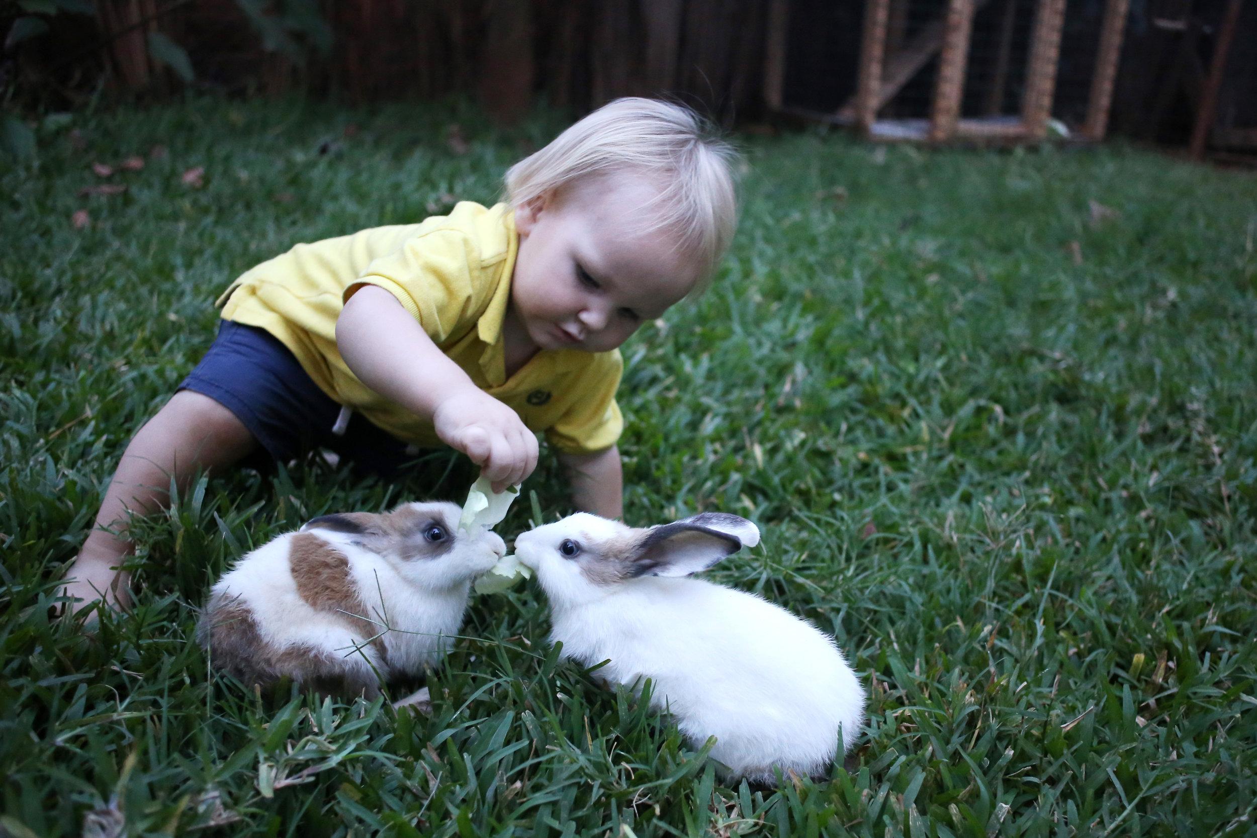 10.3.16 New bunnies.JPG