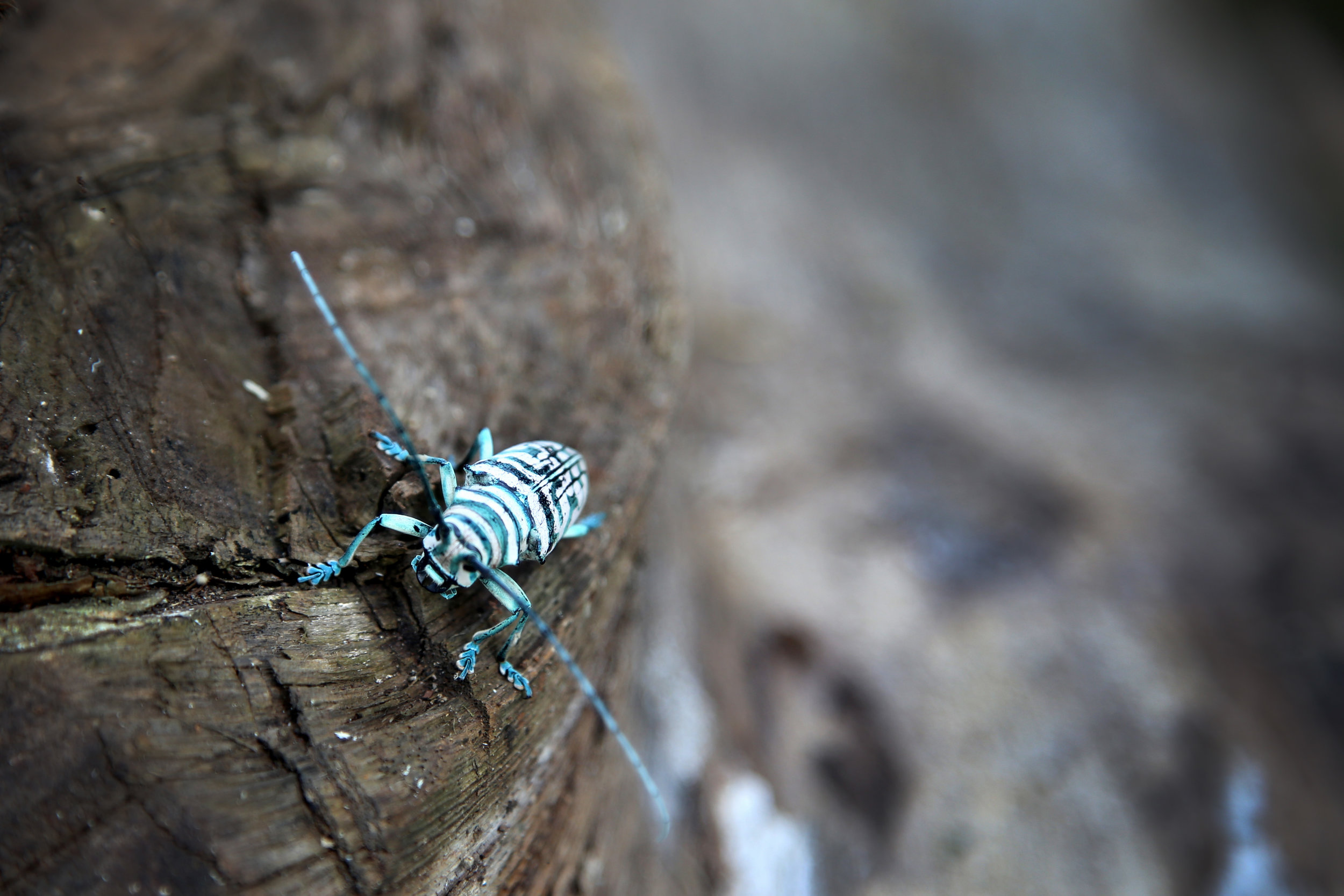 8.3.16 Pretty cockroach.JPG