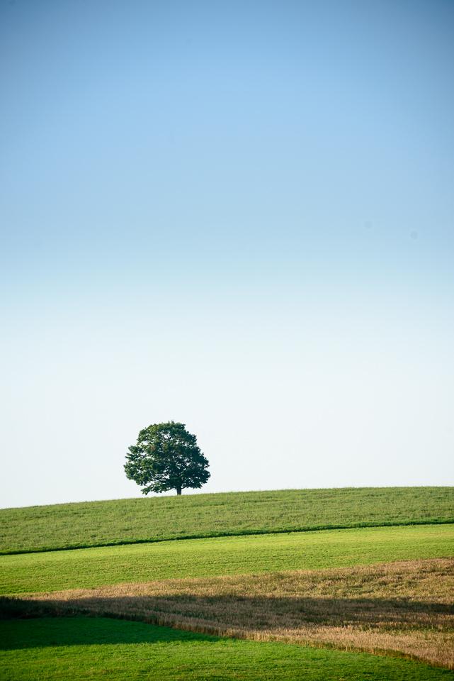 Nigel Fearon Photography | Sussex Balloon Fiesta (32 of 32).jpg