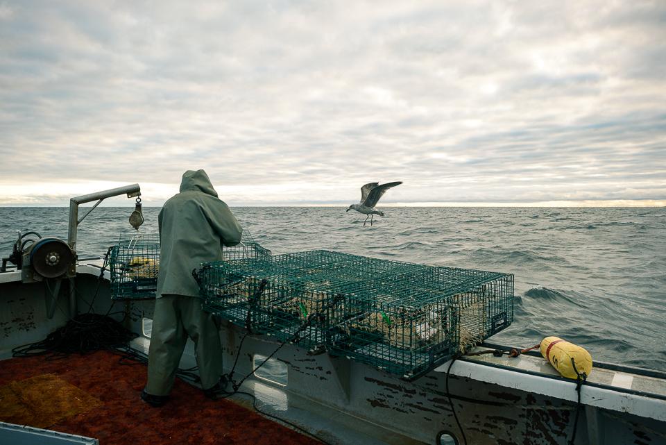 Nigel Fearon Photography | Lobster Fishing-15.jpg