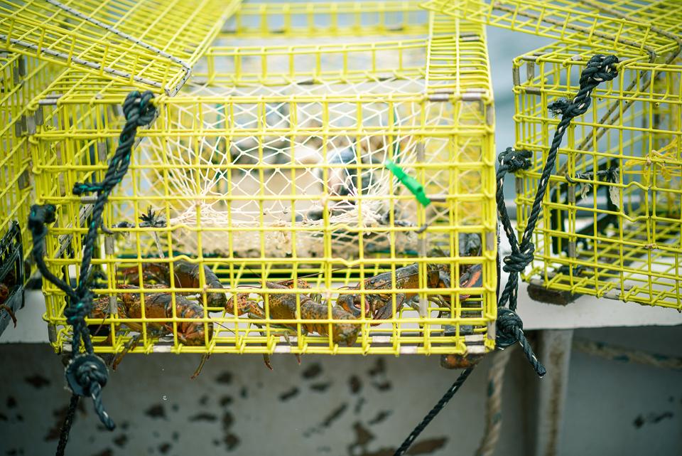 Nigel Fearon Photography | Lobster Fishing-27.jpg