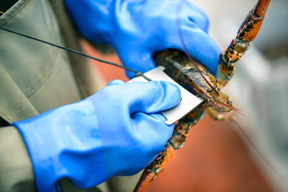 Nigel Fearon Photography | Lobster Fishing-29.jpg