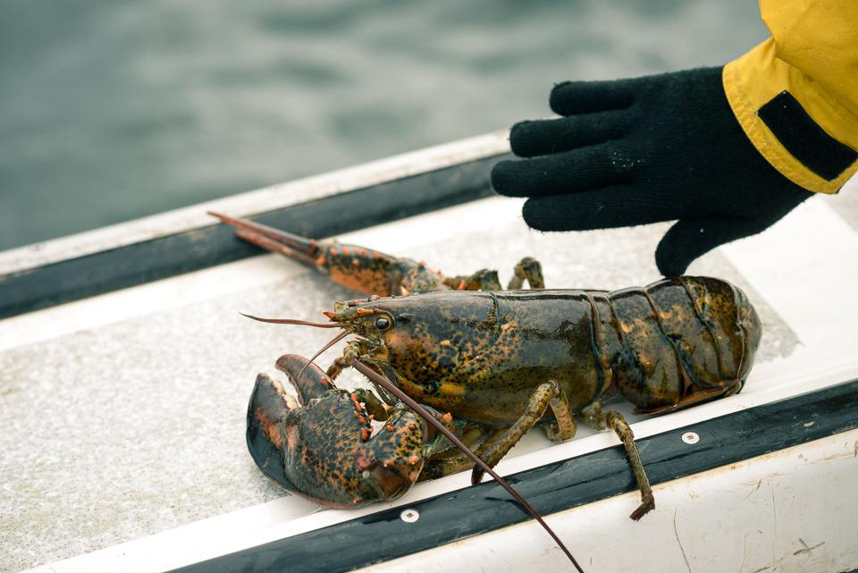 Nigel Fearon Photography | Lobster Fishing-30.jpg