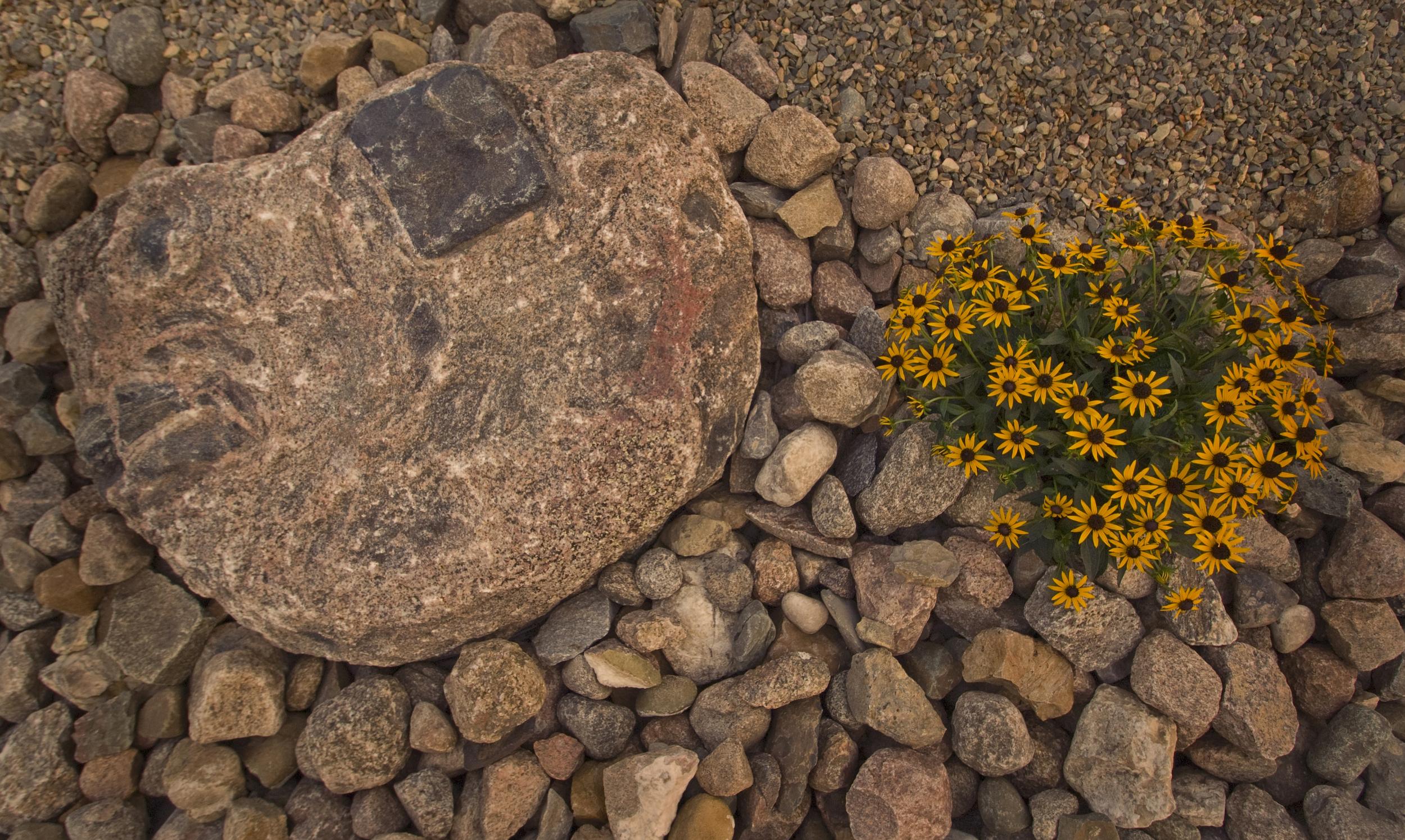 _ALE0155 perennial up close.jpg