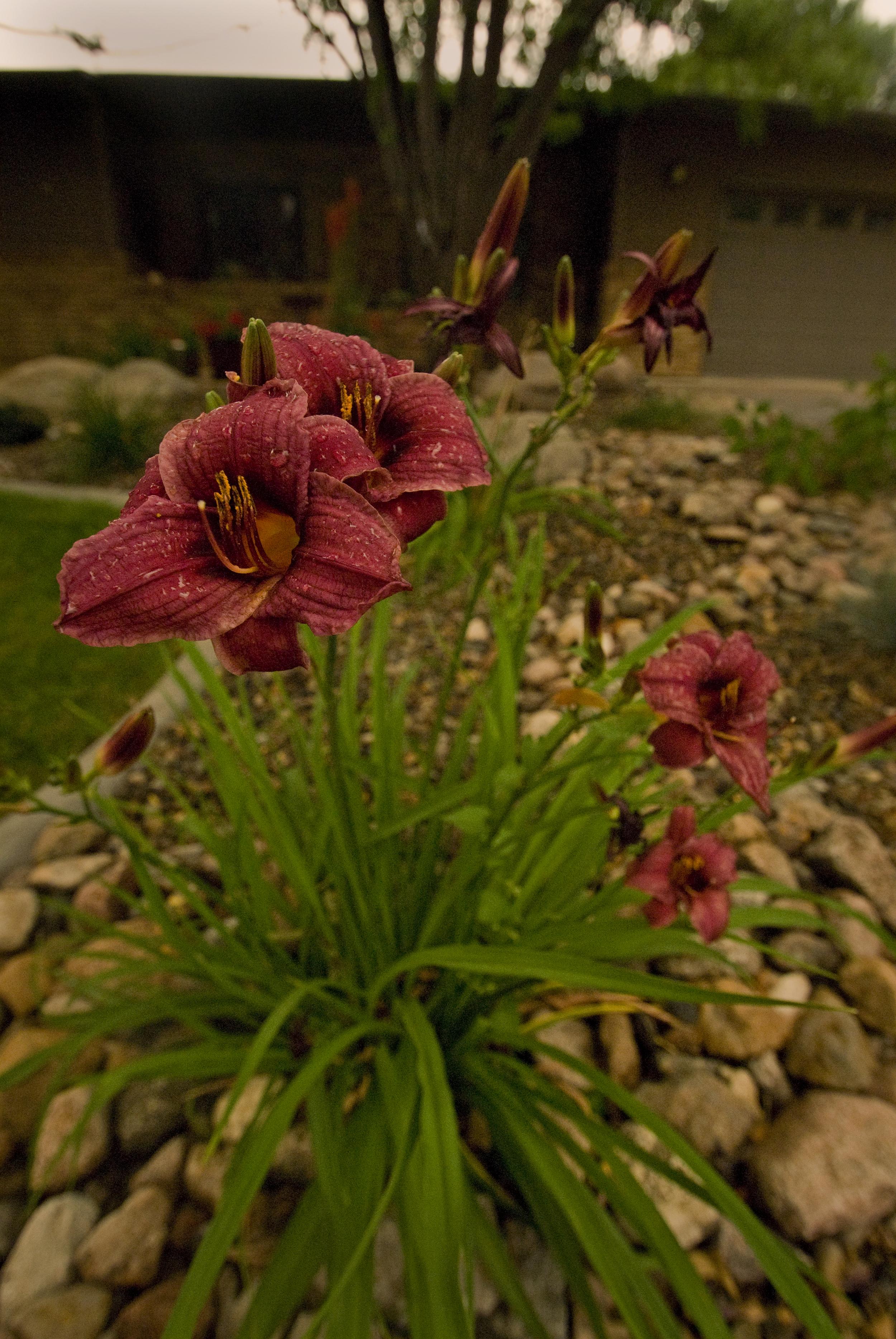 _ALE0289 perennial up close.jpg