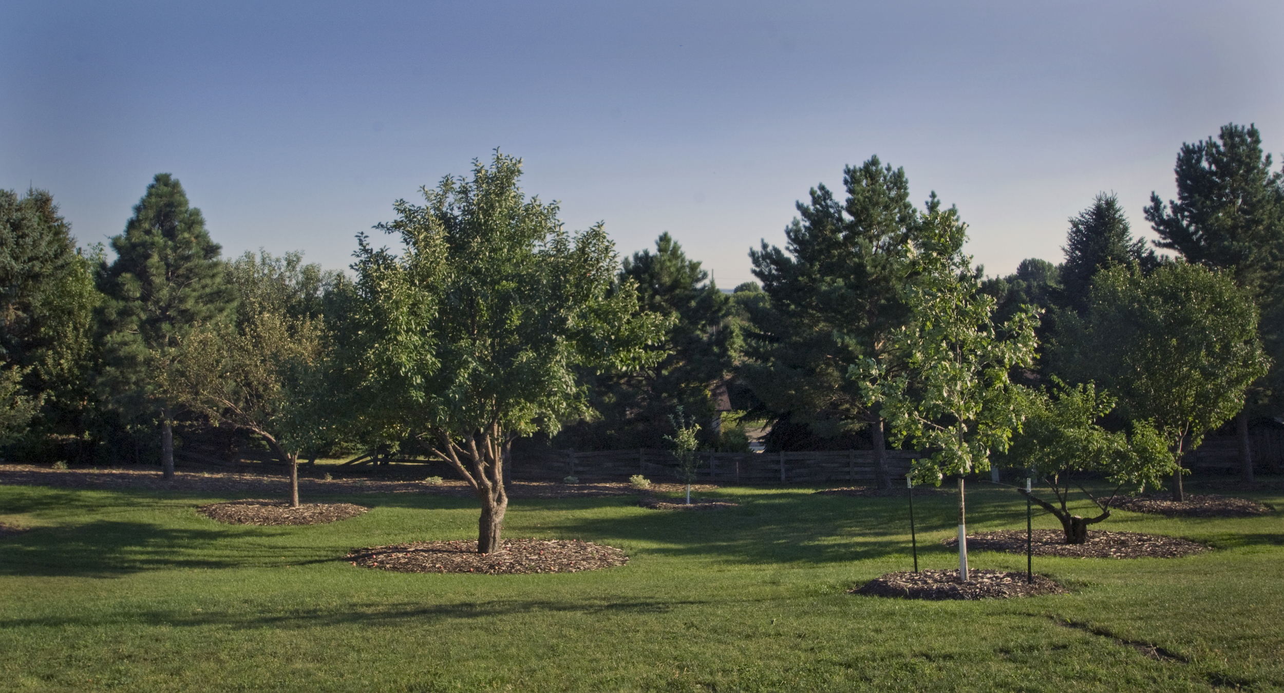 _ALE0409 trees.jpg