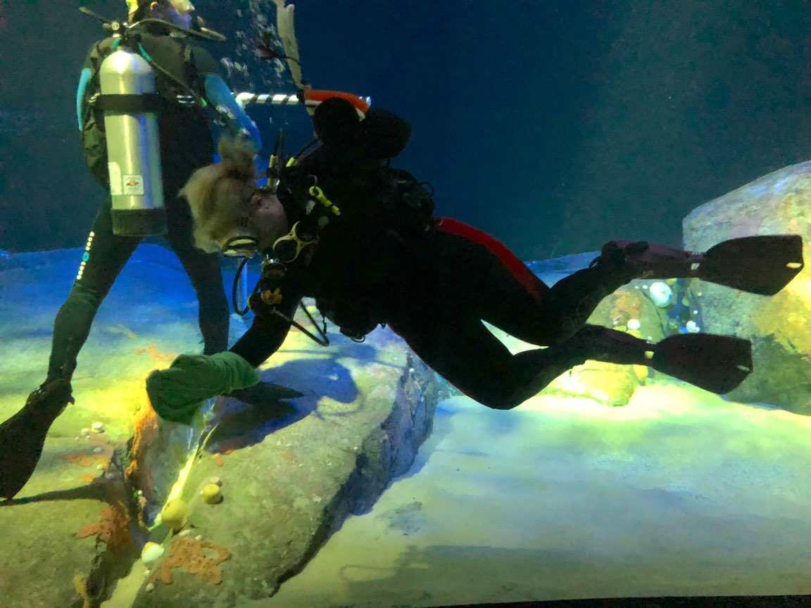 Even amongst the magnificent sharks, daily duties have to be finished. Here, I clean the windows in Ocean Wonders: Canyon's Edge.  Photo Credit, Megan E. Weber, 2018