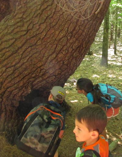 Exploring during KLT's 2013 Summer Nature Program at Small-Burnham in Litchfield.