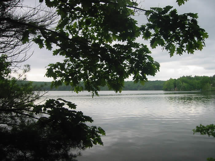 View of Webber Pond from Vassalboro Wildlife Habitat