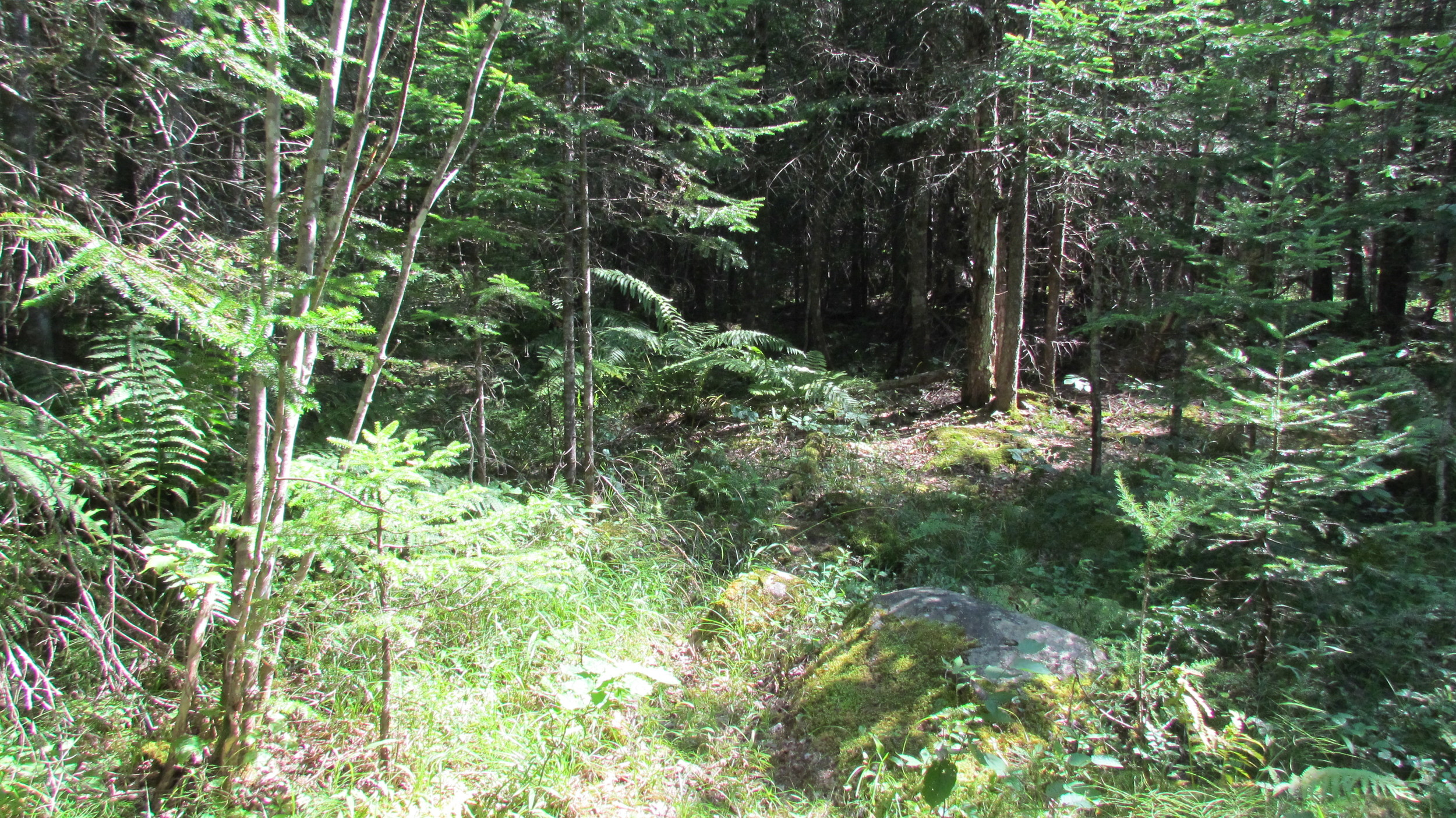 The trail Meadow Brook Sturtevant Conservation Area  Photo: Teresa Withee