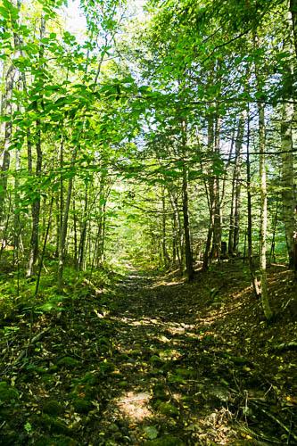 Macdonald Woods Conservation Area  Photo: Norm Rodrigue