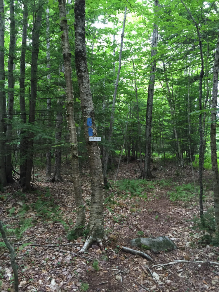 A trail junction just before the scenic lookout at the Echo Lake Watershed Preserve.  Photo: Josh Caldwell