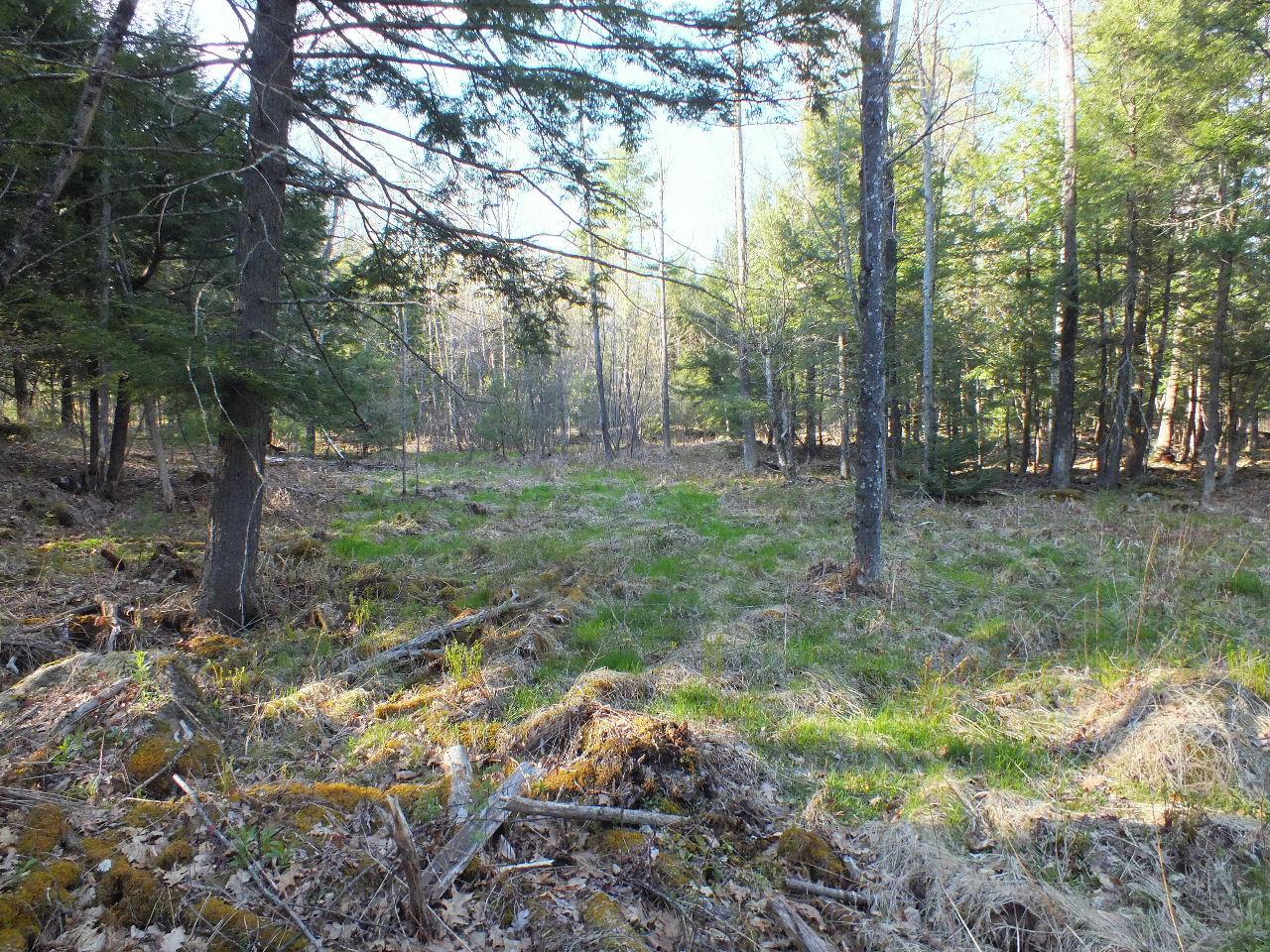 A small grassland area.   Photo: Ron Gay