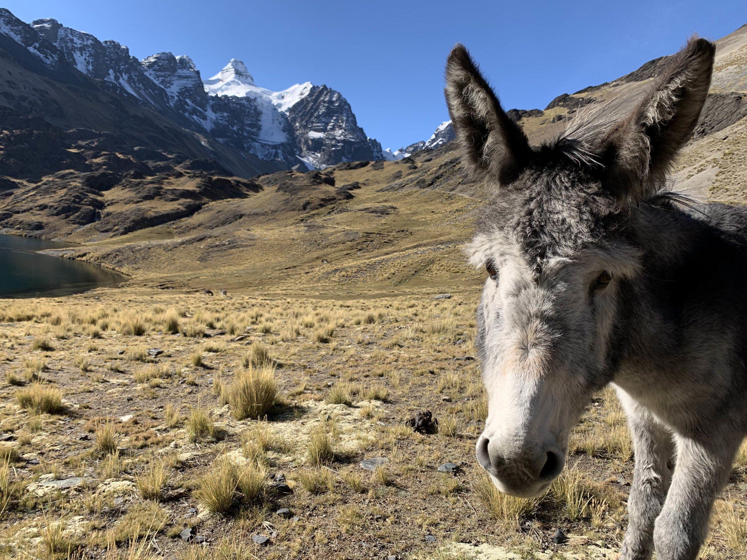 oh, hello, donkey
