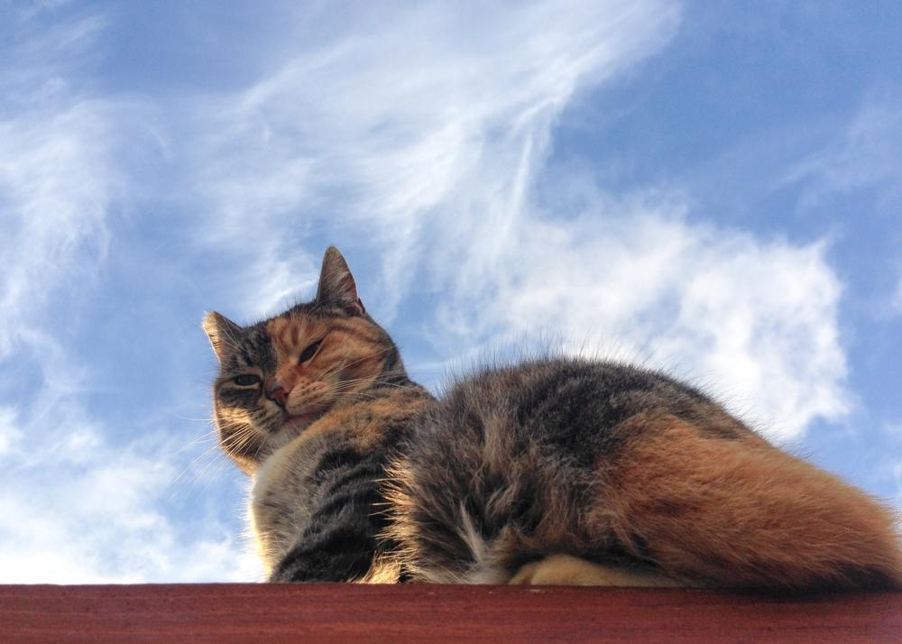 She keeps watch.
