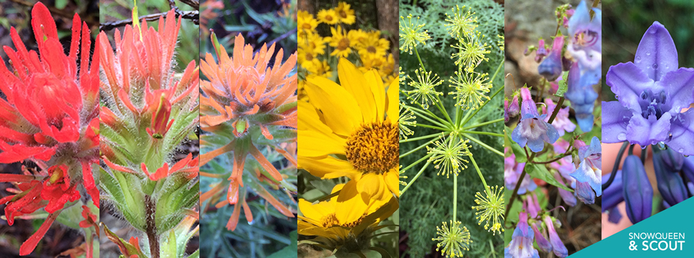 SQS-wildflowers.jpg