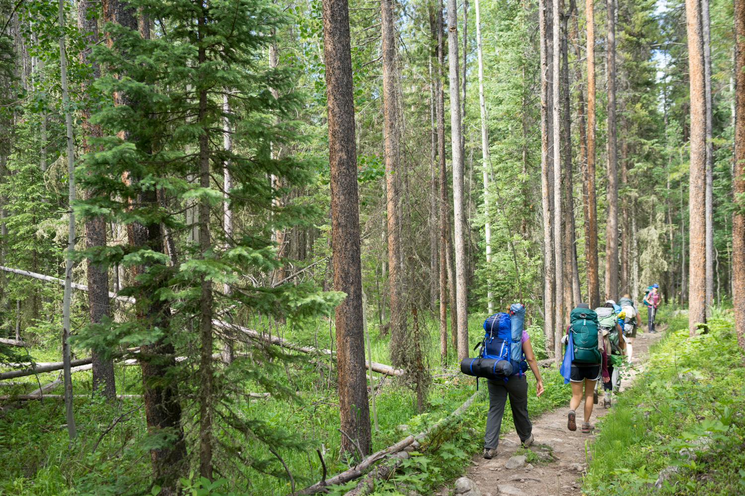 There is something so beautiful about a group of women backpacking together. It's one of my favorite sites in the wilderness.