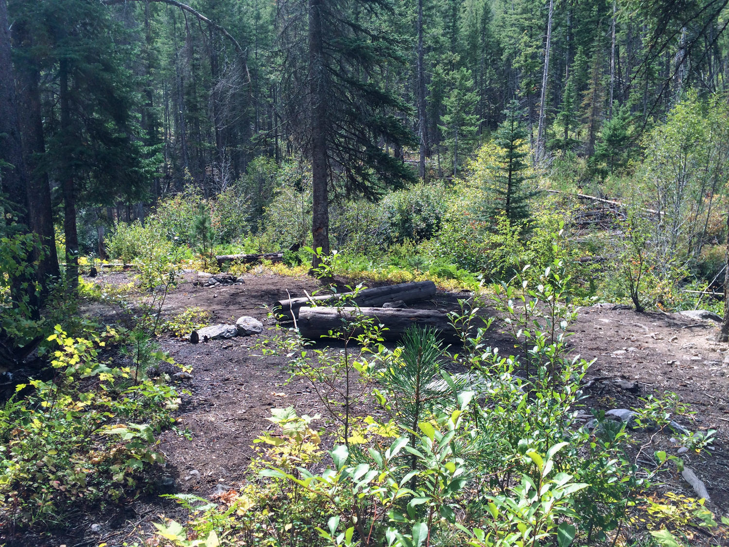 I was hiking in the Selway-Bitterroot up Mill Creek in search of places to camp. This area was particularly noticeable considering how large the impacted area was. If you're in a high-use area, consider using already impacted areas like this, so you don't cause anymore damage to surrounding areas.