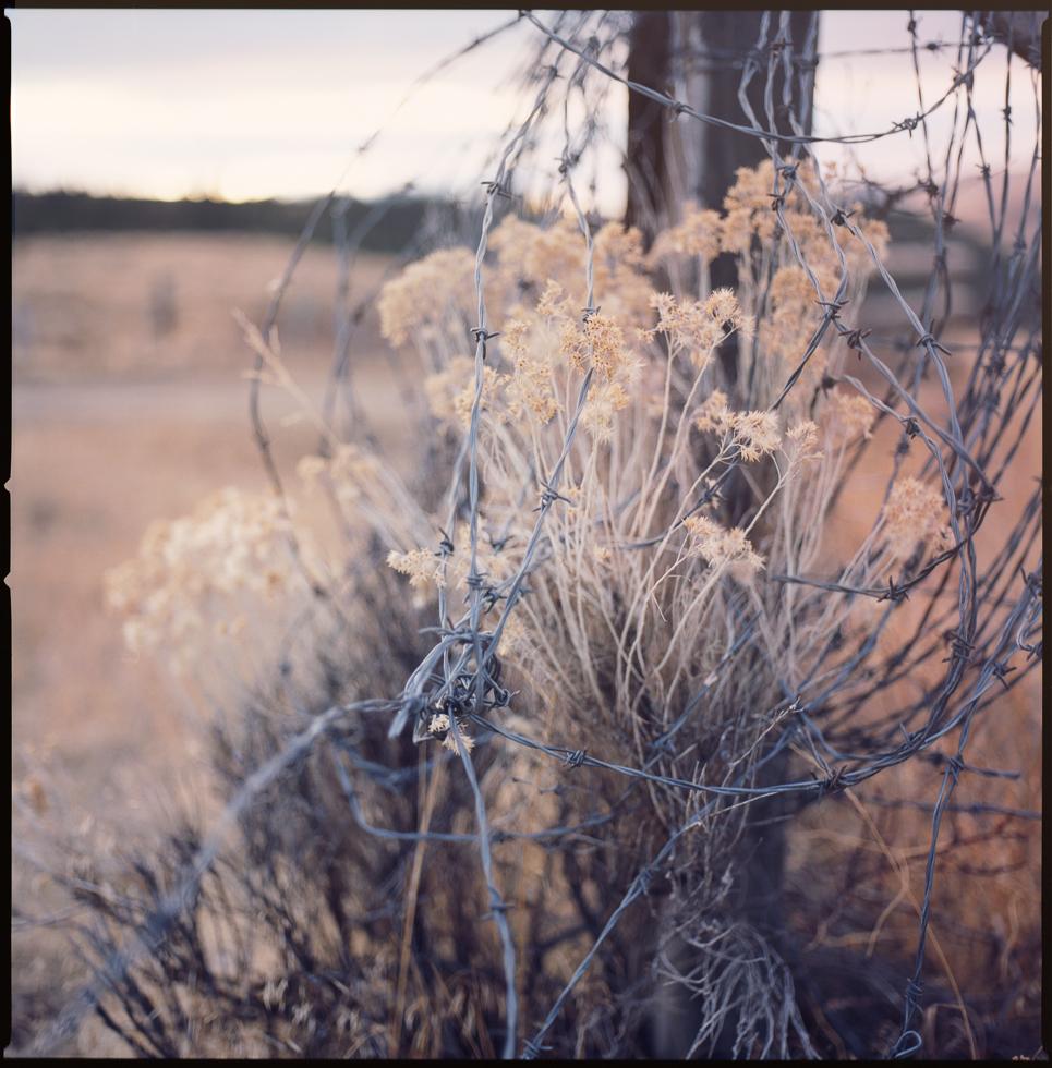 Grasslands#2.jpg