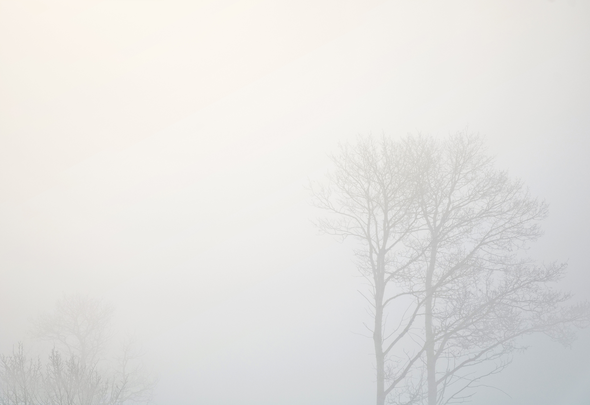 distance-tree#3-flt.jpg