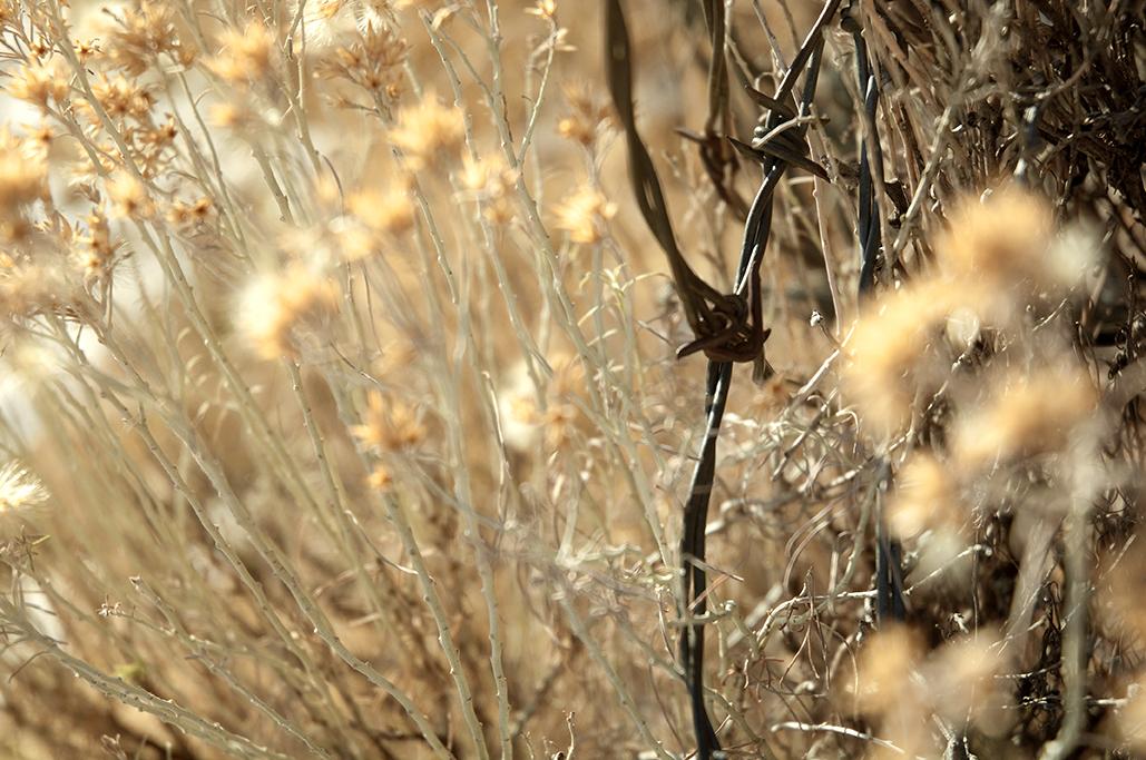 knuts-nov2012-6resize.jpg