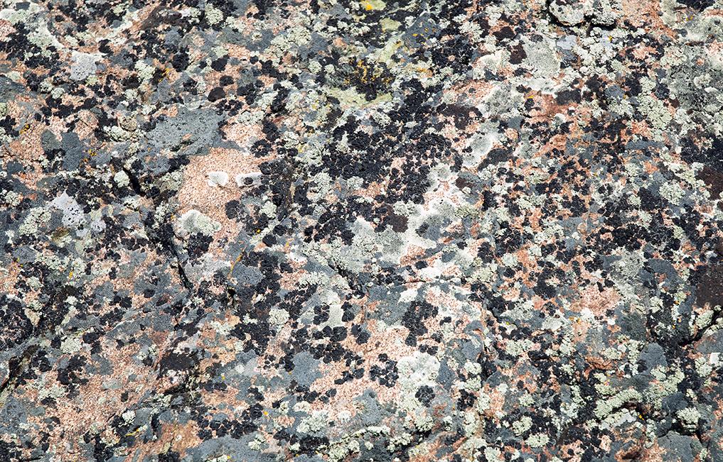 lichen-splatter#1-giclee.jpg