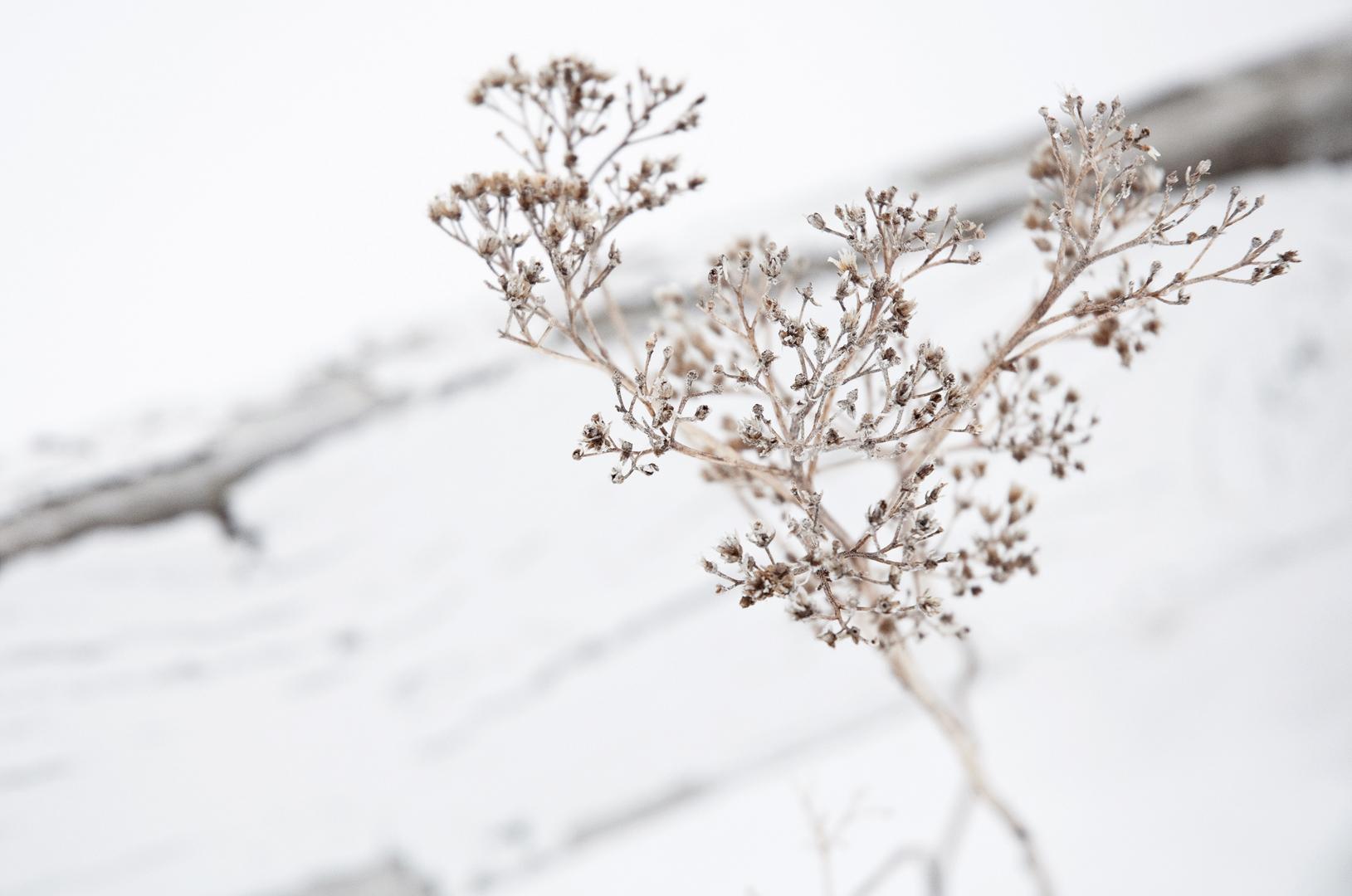 stem-on-whitecrop-flt.jpg